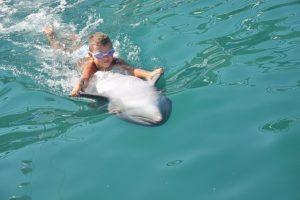 delfin-639870__340
